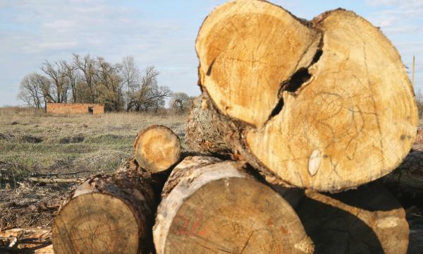 木材期貨爆升 / 留意農業股